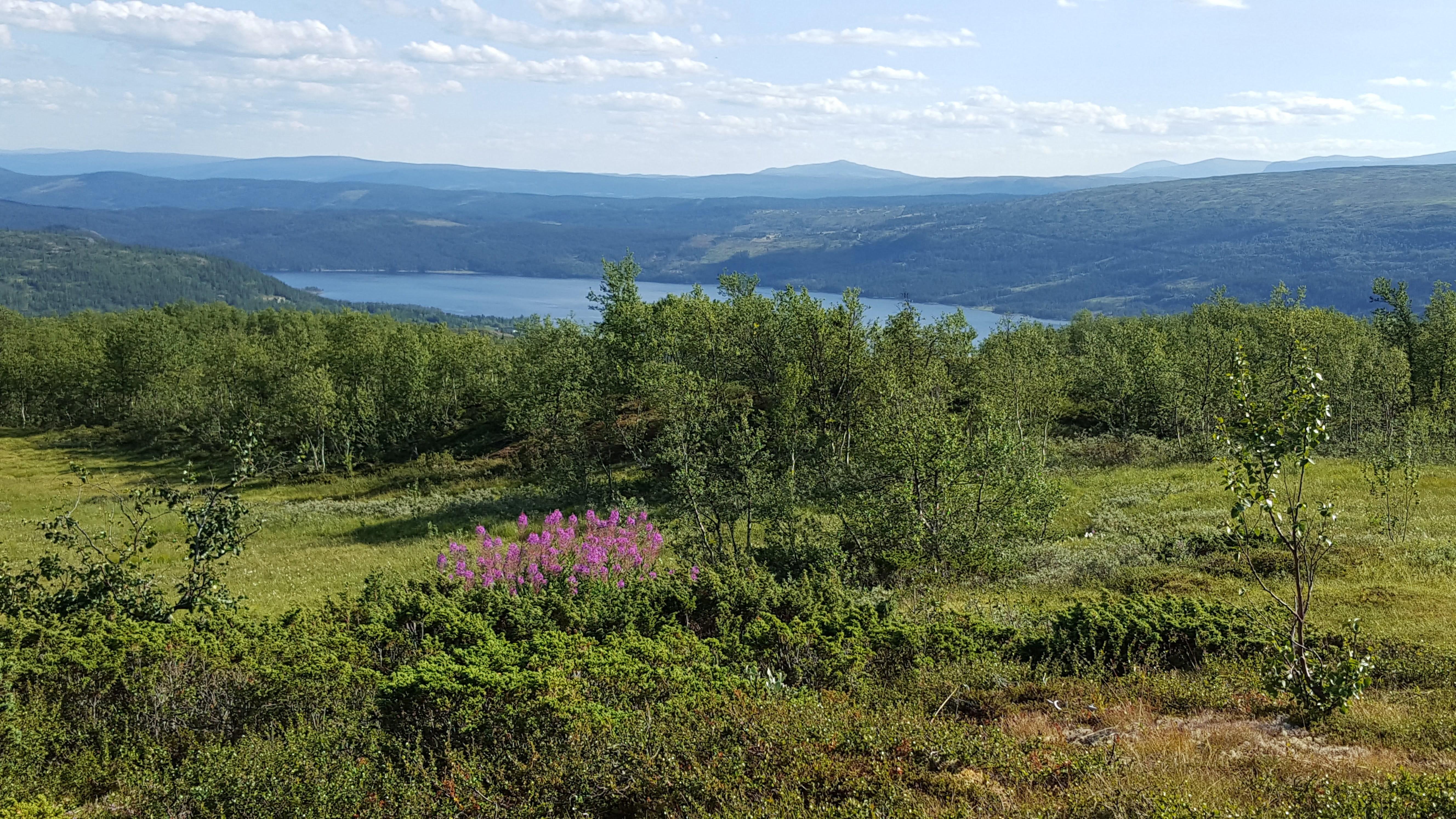 Utsikt fra myra mot Øyungen